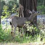 Bambi passeando pela floresta.