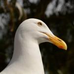 Ela é uma modelo! Em Alcatraz Island.