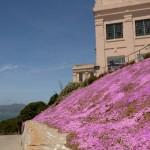 Hoje Alcatraz tem vida!