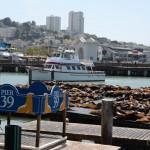 PIER 39 - o ponto mais visitado (e lotado!) da cidade. Até os leões marinhos ajudam a encher o local!