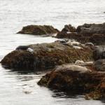 O local tem muita vida, além de uma flora marinha riquíssima.